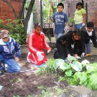 community gardens kids gardening